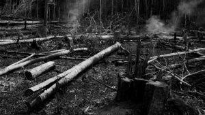 """""""Los incendios son inducidos por el hombre, generalmente, por agricultores y ganaderos"""""""