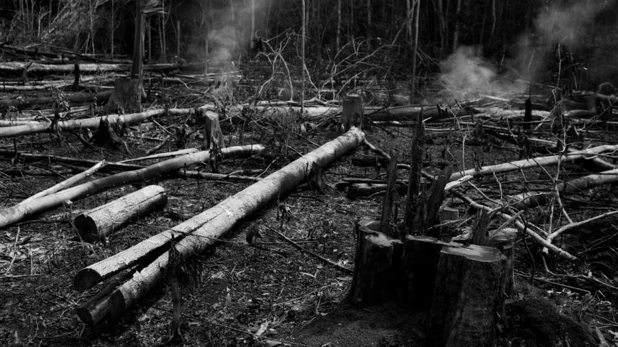 Brasil Amazonia incendio forestal la-tinta