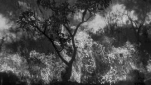 Impactante registro fotográfico de la selva amazónica en llamas