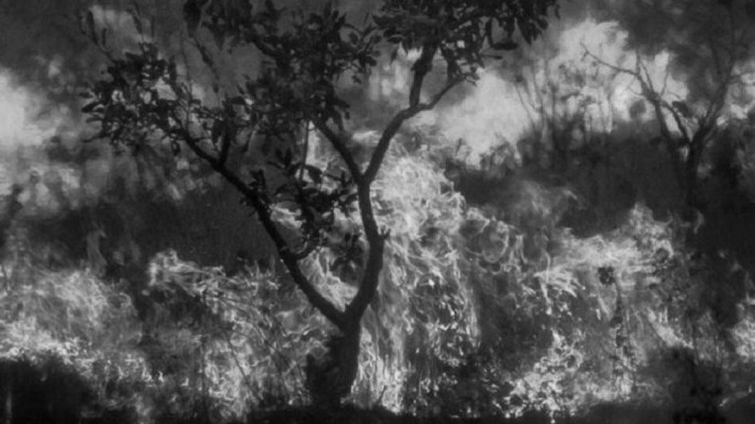 Impactante registro fotográfico de la selva amazónica en llamas_Araquém Alcântara_portada