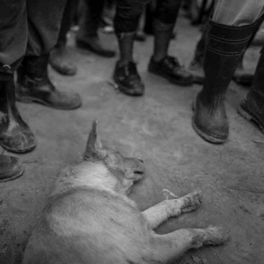 MAFIA-perro-botas-hombres-tierra