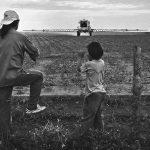 Transgénicos: en los últimos años, se disparó la aprobación de semillas sin ningún control