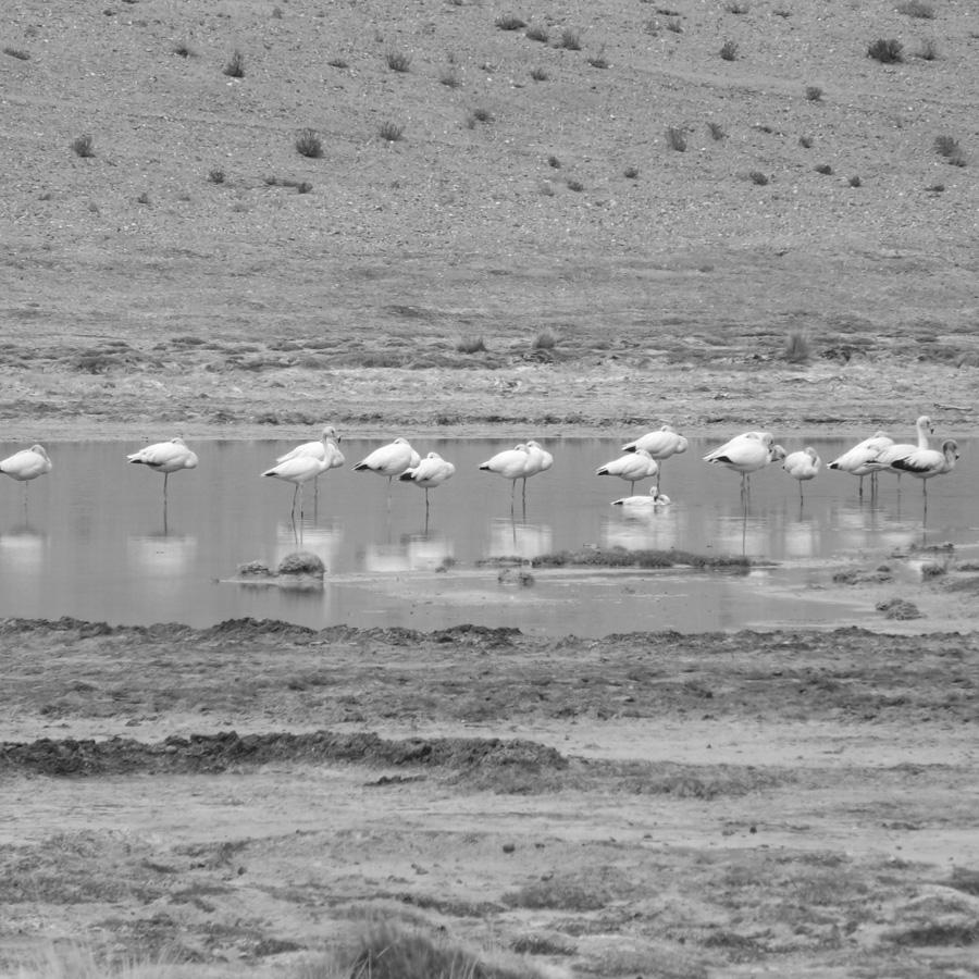 Antofagasta-de-la-Sierra-Catamarca-mineria-litio-14