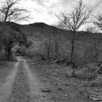 Denuncian desmontes en el predio de Reserva Sierras de Punilla