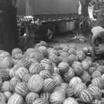 Agricultura familiar: venden 20 toneladas de frutas y verduras santiagueñas en Buenos Aires