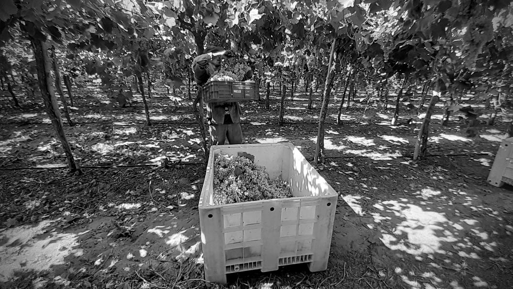 cosecheros-planes-larioja-chilecito3