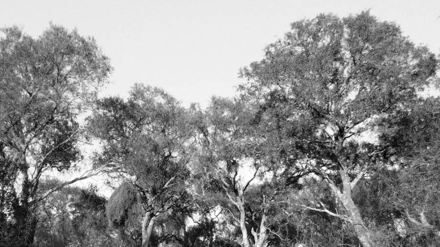tinoco-bosque-desmonte-ambiente