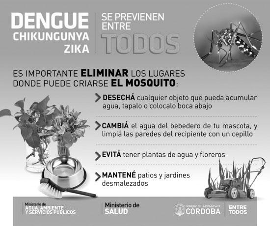 aedes_aegypti-mosquito-dengue-02