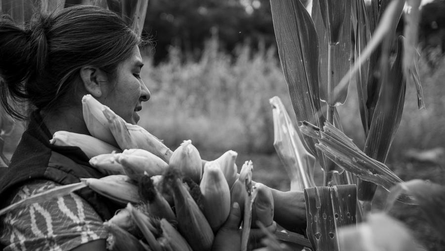 Agroecologia-Las Rositas-Cinturon Verde2