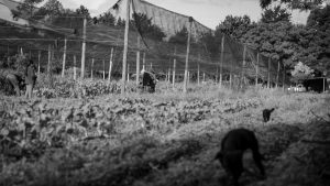 Del hambre de las barriadas populares a la reforma agroalimentaria del campo