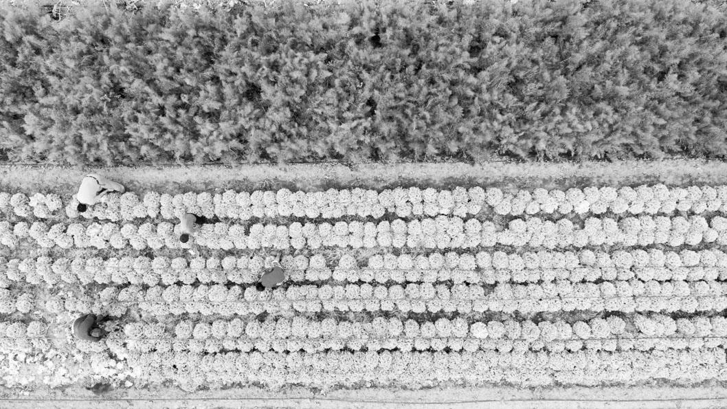 Catriel-Marmo-UTT-tierra-agroecologia