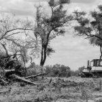Gran Chaco: el desmonte no cesa