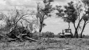 Denuncian que funcionario de Ambiente de Alta Gracia desmontó bosque nativo