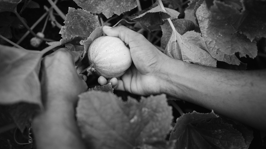 pandemia-sistema alimentario mundial-agroecología