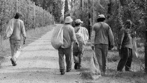 """Trabajadores golondrina: """"nos dejaron abandonados como los perros"""""""