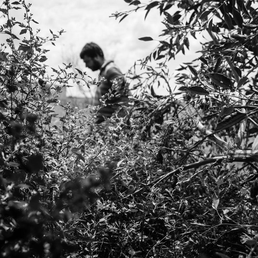 Campo-planta-retrato-sembradio-aire-libre
