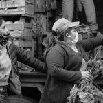 UTT: la conquista del pan y de las flores en tiempos de pandemia
