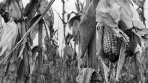 La importancia de la alimentación en tiempos de pandemia
