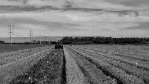 Ensayo y error: pandemia y sustentabilidad, del sistema agroalimentario a la sobrepoblación urbana
