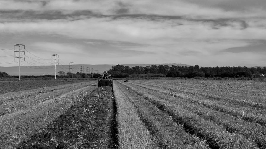 campo-agroecología-soberanía-alimentaria-papas