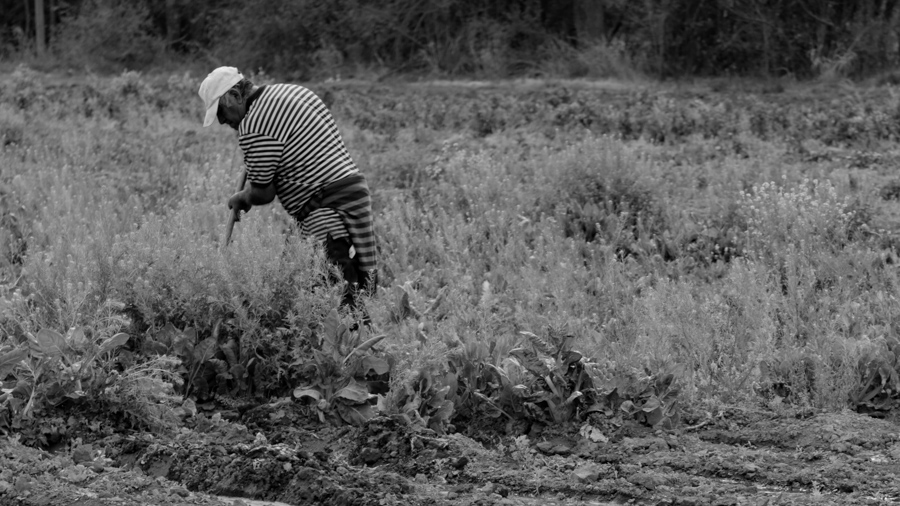 campo-cooperativa-San Carlos-agroecología
