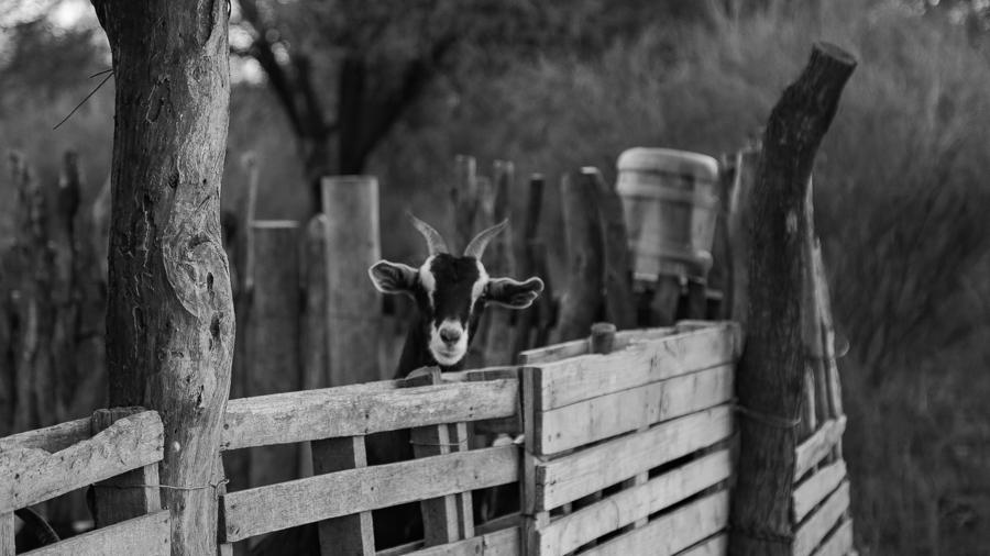 campo-libertad-cabra