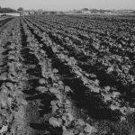 El campo que nutre la Soberanía Alimentaria