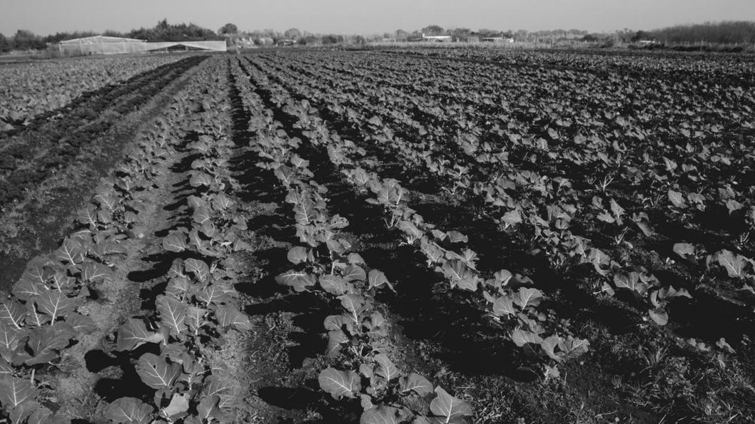 campo-soberania-alimentaria-agroecología