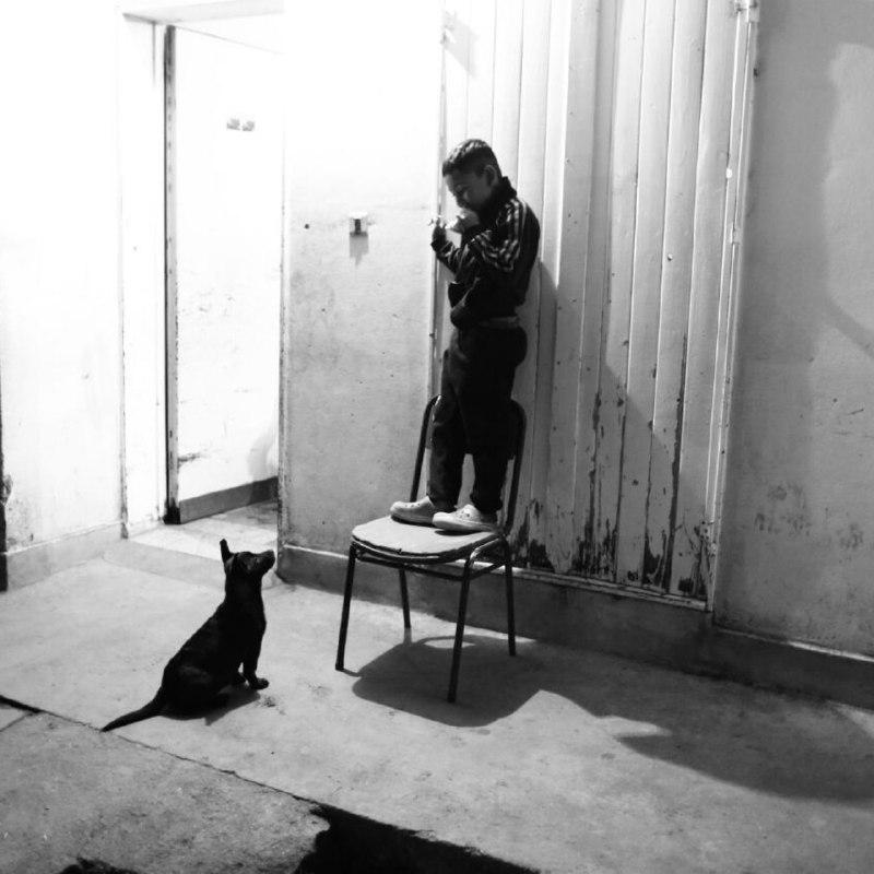 perro-nene-retrato-barrio
