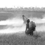 La contaminación por glifosato desborda los ríos españoles