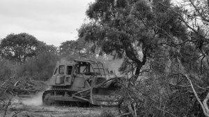 Extractivismo forestal y olvido social en la región chaqueña argentina