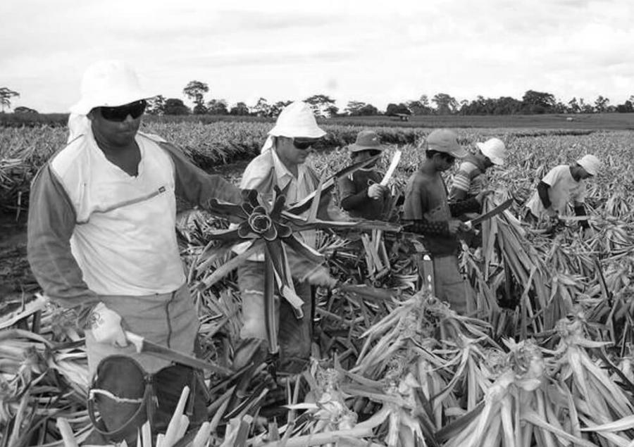 costa rica trabajadores del campo la-tinta