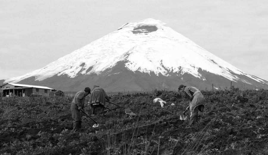 ecuador campesinos agricultura la-tinta