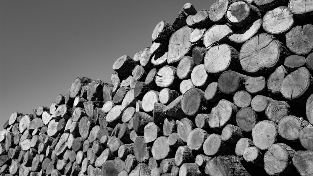 leña-madera