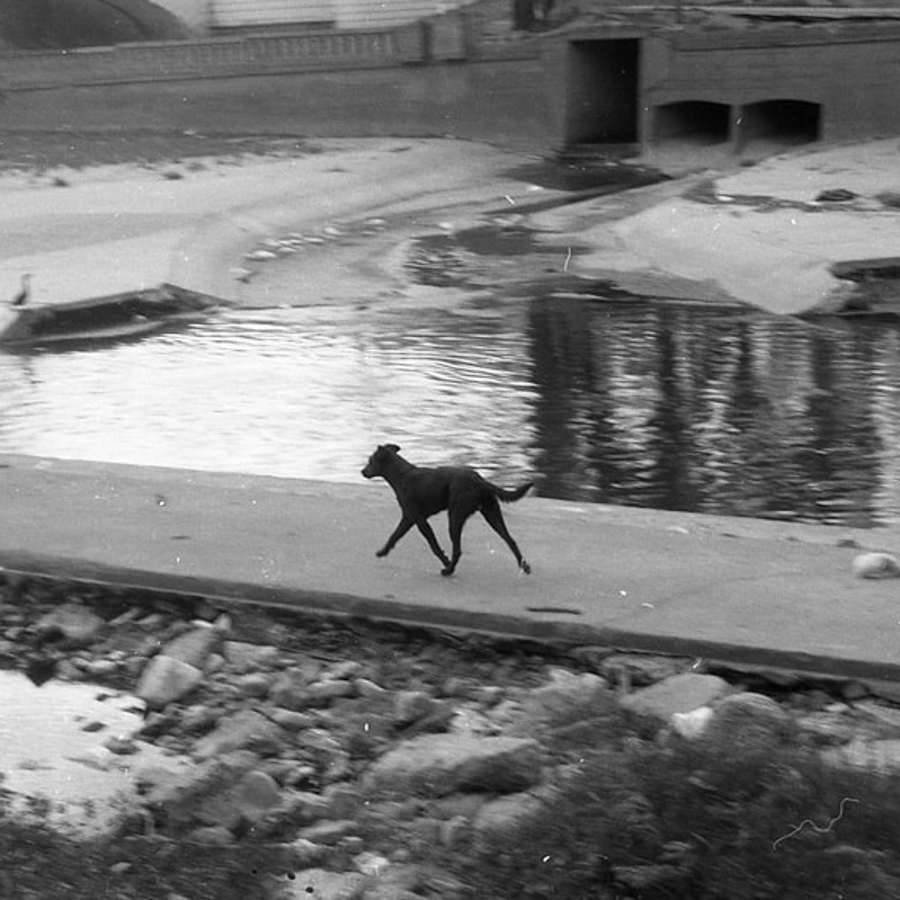 perro-rio-tato-cicero