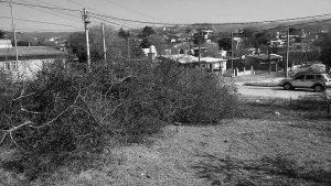 Indignación en Alta Gracia: denuncian que el Municipio desmontó una zona protegida