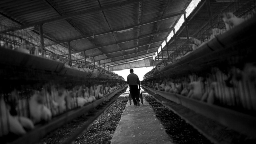 criadero-matadero-animal-agronegocio-antibiotico-epidemia-enfermedad