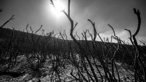 """""""Es vital que el bosque que queda por donde pasó el fuego se recupere"""""""