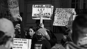 Los nuevos incendios intencionales frente a Rosario le dan impulso a una ley nacional de humedales