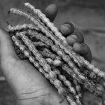Alimentos ancestrales: larga vida al monte nativo