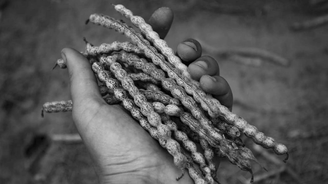 Alimentos-ancestrales-monte-nativo-traslasierra-2
