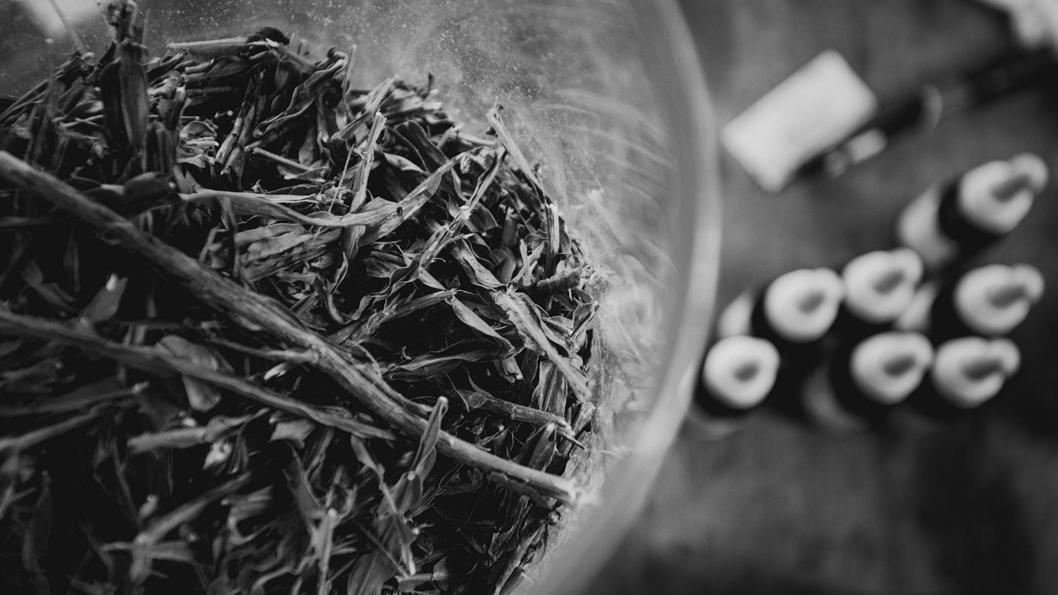 UTT-medicina-natural-hierbas-salud-Juan-Pablo-Barrientos-03