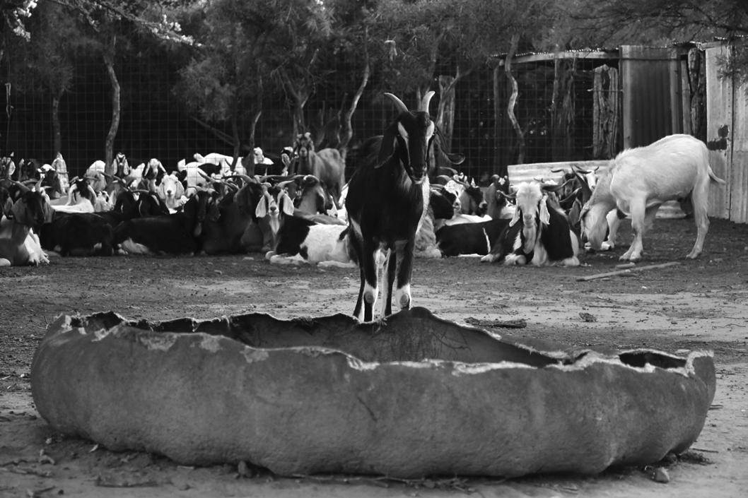 fernando-balicki-literatura-cabra