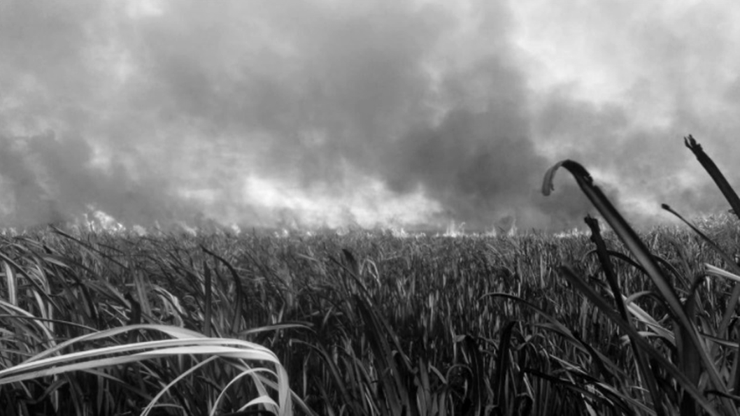hudson-parana-humedales-incendios-1