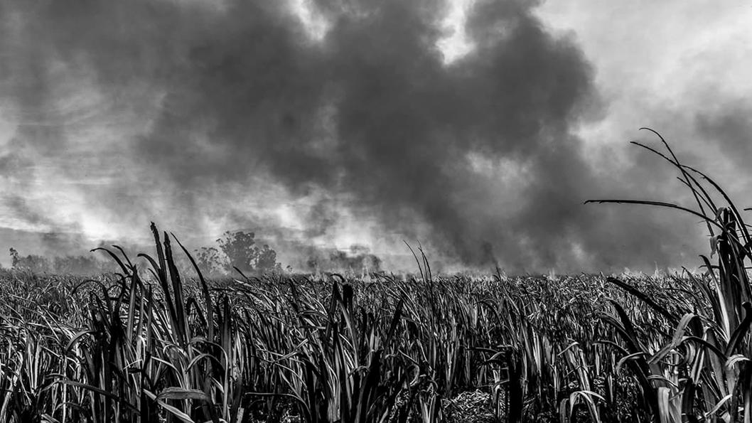 hudson-parana-humedales-incendios-3