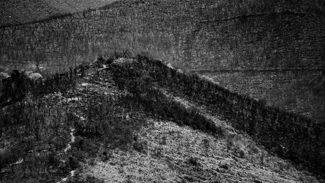 incendios-codebona-bosque-nativo