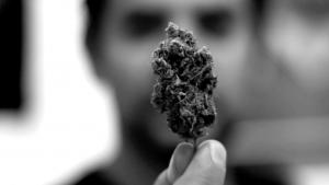 Lanzan la primera encuesta sobre uso de cannabis en Argentina