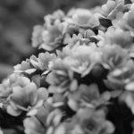 Amante de las flores