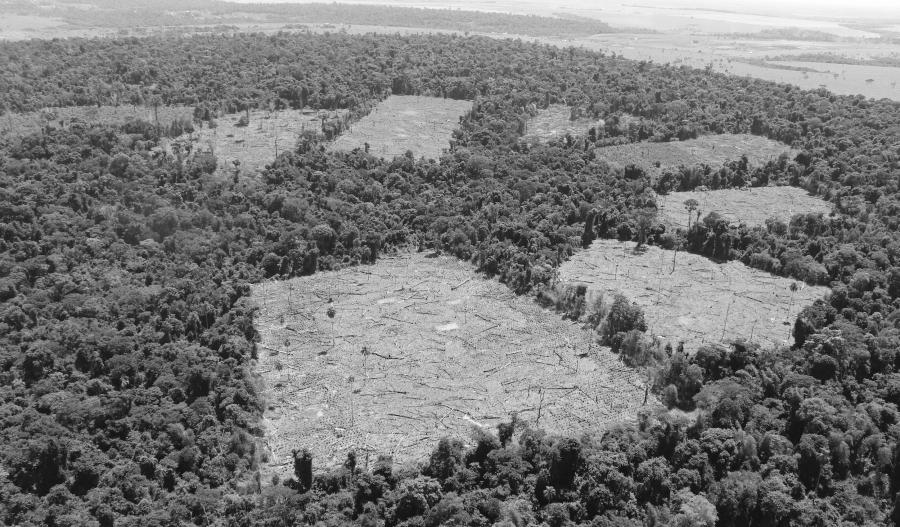 Paraguay deforestacion agronegocios la-tinta
