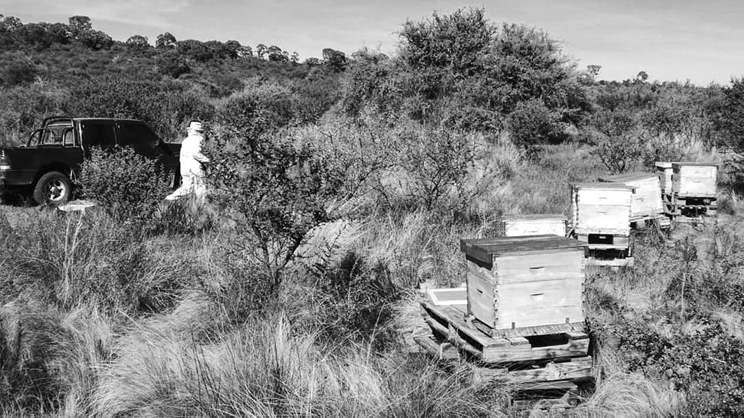 abejas-miela-characato-incendios3